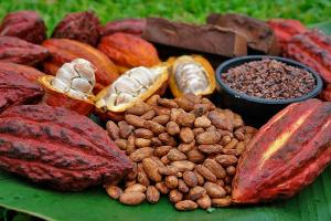 Cacao para Twitter